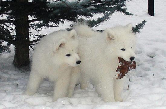Самые красивые собаки фото