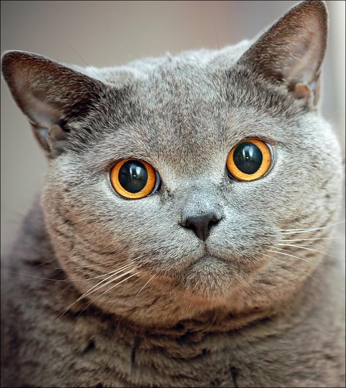 И кошка, к сыночку прижавшись бочком,ласкала