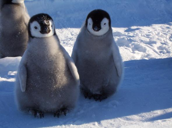 Холодный комфорт в антарктиде