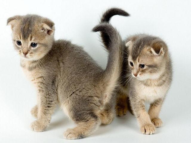 Обои Кошки ( Коты ) Животные Фото 122946