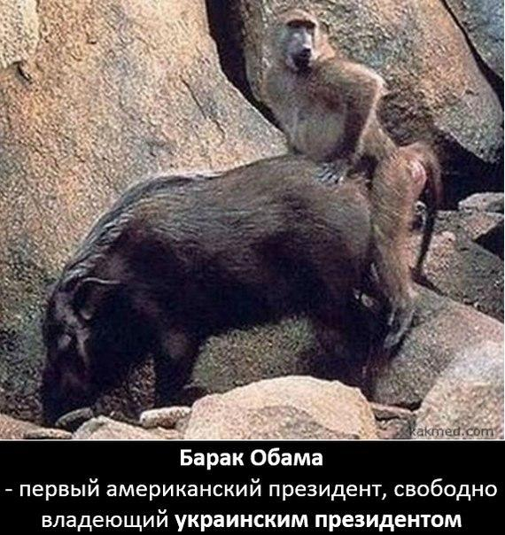 bloodhound-gang-golie-telki