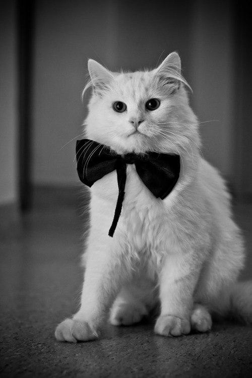 Картинки кошки на аву в вк для