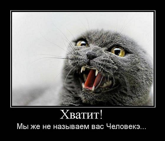 Смешные картинки про кошек с надписями с матом