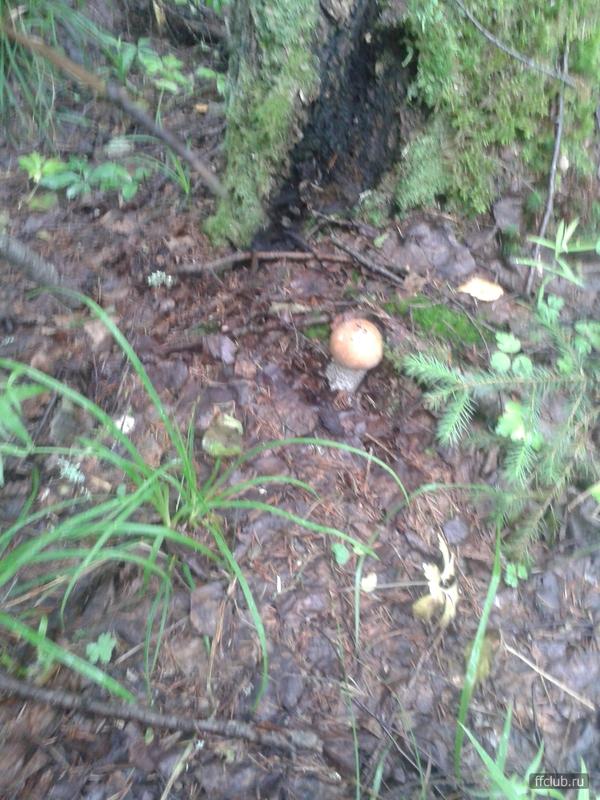 предпраздничной грибные места в ульяновской обл фото поверите